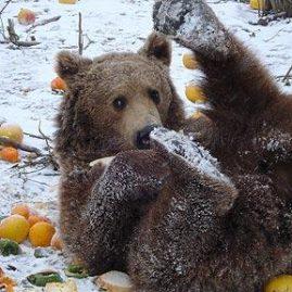 WAP (WSPA) Romanian Bear Adventure