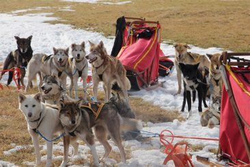 expedition-dogs