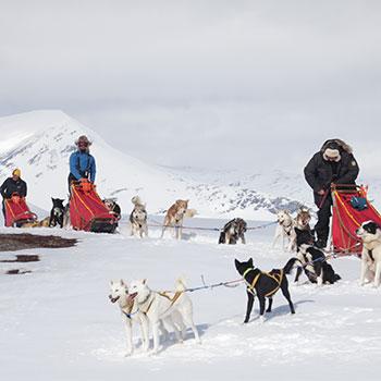 husky-sledding-norway