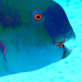RAW – Marine Mammal Programme
