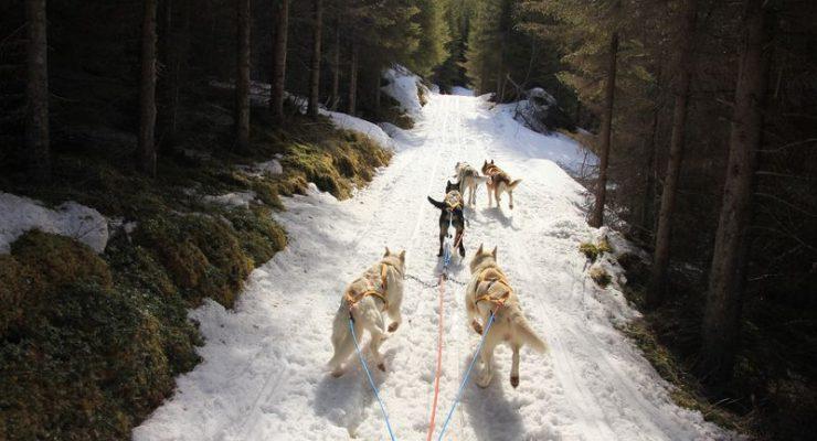sledding-forest