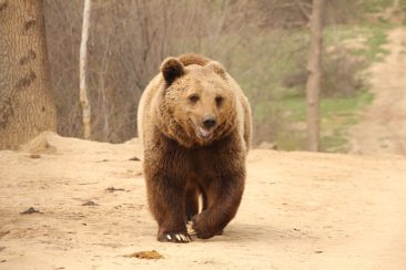 bear-sanctuary-2