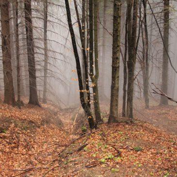 Cloud Covered Transylvania
