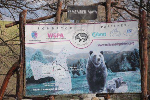libearty-bear-sanctuary