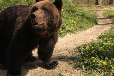 max-bear