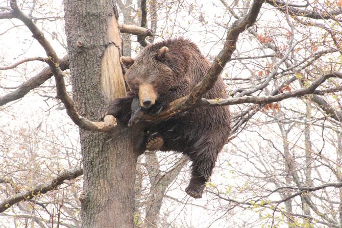 Bear Trek Transylvania