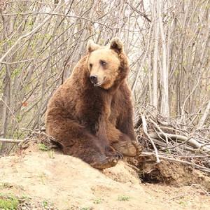 bear-450-450