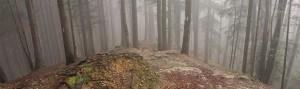 piatra-mare-forest