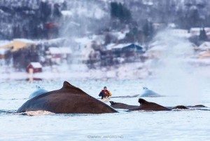 whales-kayak-1